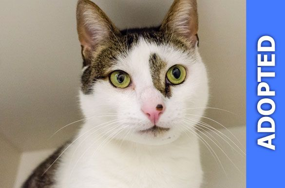 Queens was adopted!