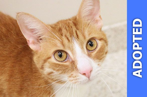 Quentin was adopted!