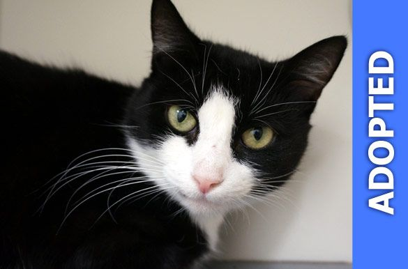 Quinny was adopted!