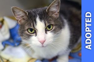 Rambino was adopted!