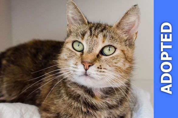 Raspberry was adopted!
