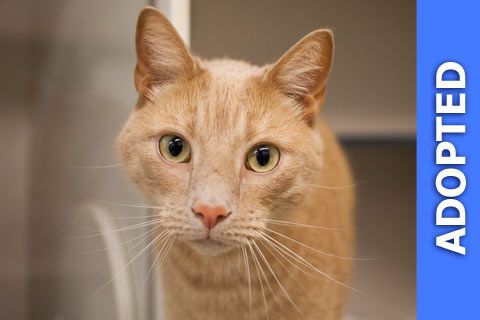 Richmond was adopted!