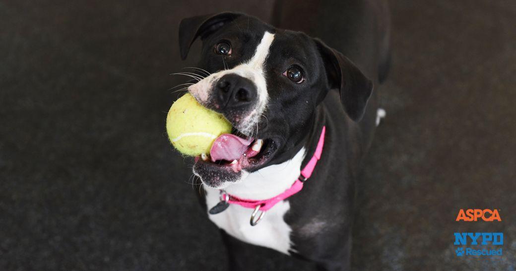 Adoptable Dogs Adoption