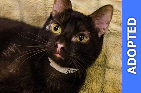 Robin was adopted!