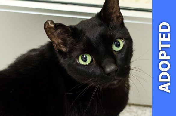 Rodney was adopted!