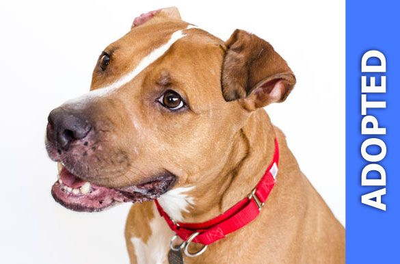 Romeo was adopted!