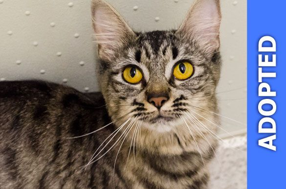 Rosaline was adopted!