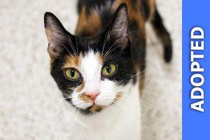 Sabathia got adopted!