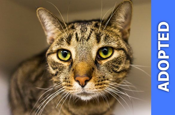 Salmon was adopted!