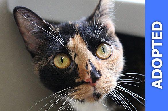 Samara was adopted!