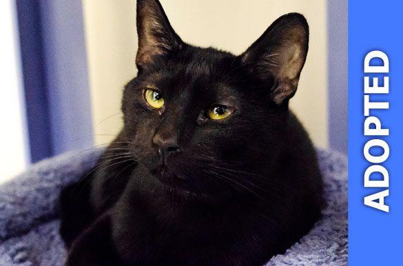 Sevenito was adopted!