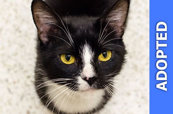 Sheila was adopted!