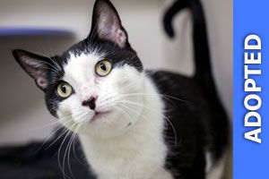 Shy was adopted!