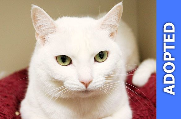 Sibyl was adopted!