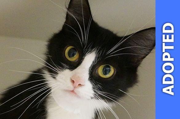 Sierra was adopted!