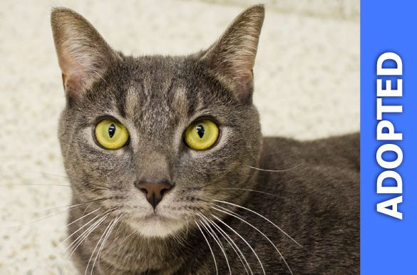Smokey was adopted!
