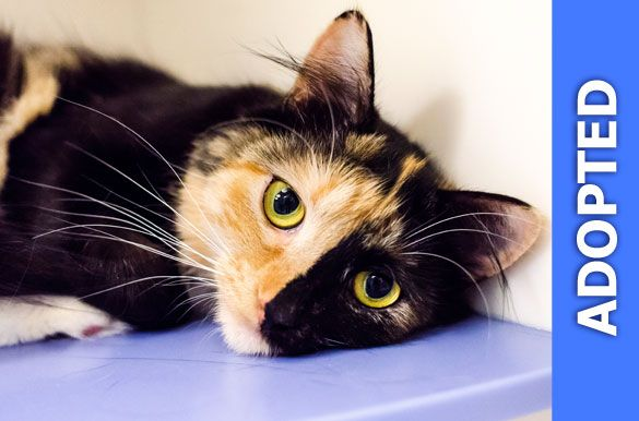 Solange was adopted!