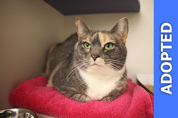 Sonya was adopted!
