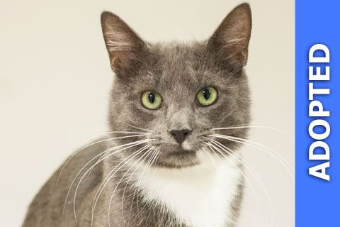 Sugilite was adopted!