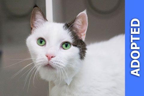 Summerlina was adopted!