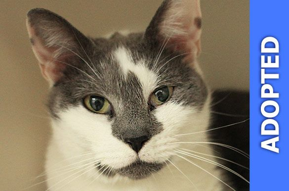 Sweetness was adopted!