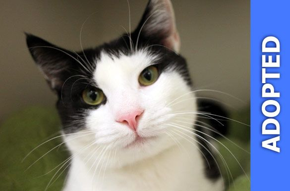 Swiss Roll was adopted!