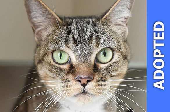 Tauja was adopted!