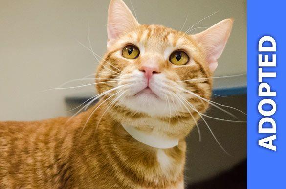 Tigger was adopted!
