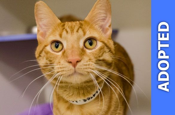 Tim Tim was adopted!