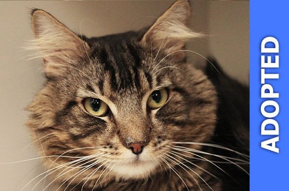 Tom Tom was adopted!