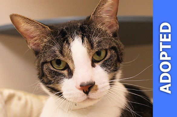Trouser was adopted!