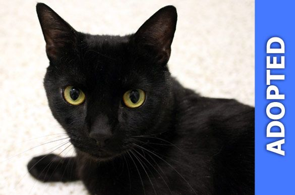 Truffle was adopted!