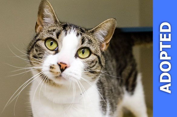 Valentina was adopted!