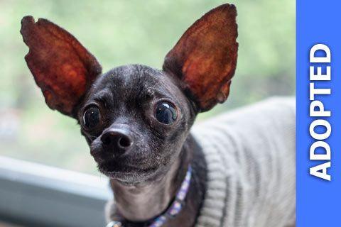 Vampiro was adopted!
