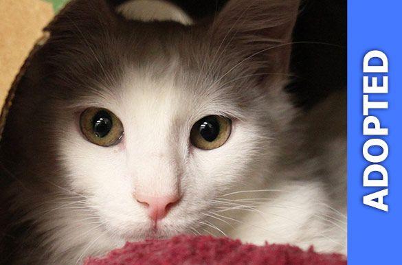 Vanilla was adopted!