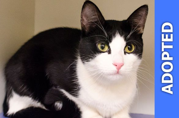 Violet was adopted!