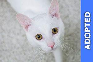 Yoshi was adopted!