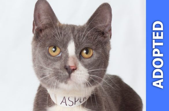 Yoshiko was adopted!
