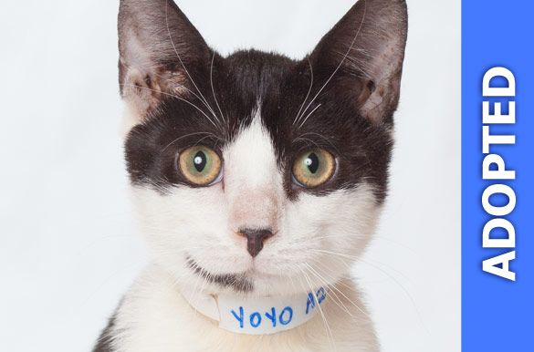 Yoyo was adopted!