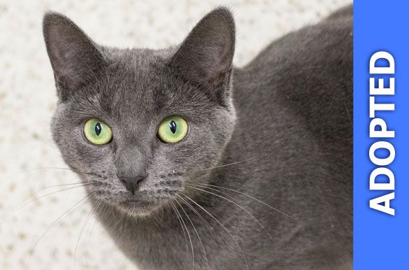 Zaffre was adopted!
