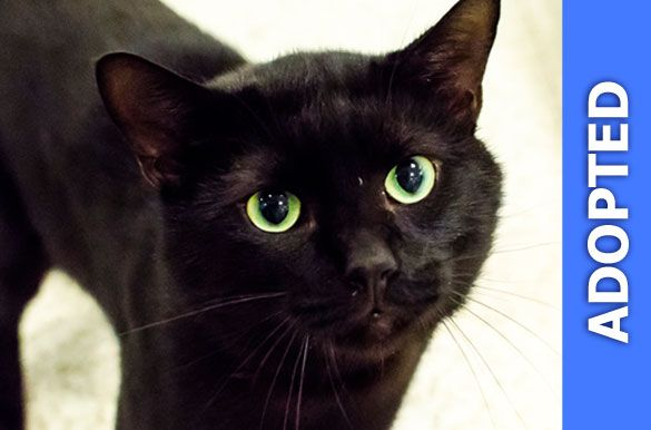 Zucchini was adopted!