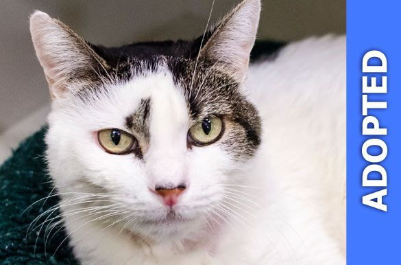 Zyrca was adopted!