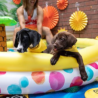two puppies in a kiddie pool