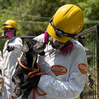 a responder in protective gear holding a rescued dog