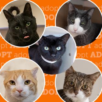 senior cats