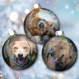 arkansas rescued dogs in christmas bulbs graphic