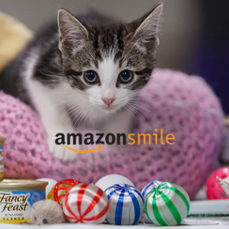 Kitten on a pink cushion catfood and the amazon smile logo