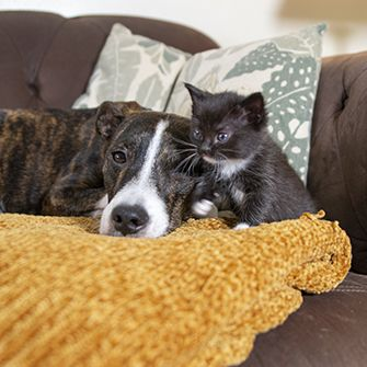 a puppy and kitten resting on a couch