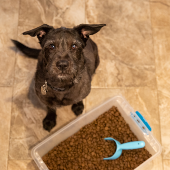 a dog and dry dog food