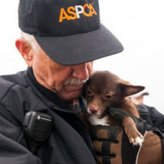 BREAKING: ASPCA Rescues Multiple Dogs